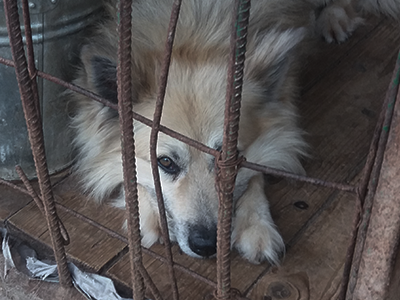 Tierschutz-Shop-Notstand-in-Russland-Tierschutzhunde-Streuner-2