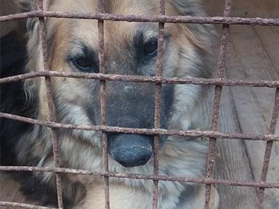 Tierschutz-Shop-Notstand-in-Russland-Tierschutzhunde-Streuner