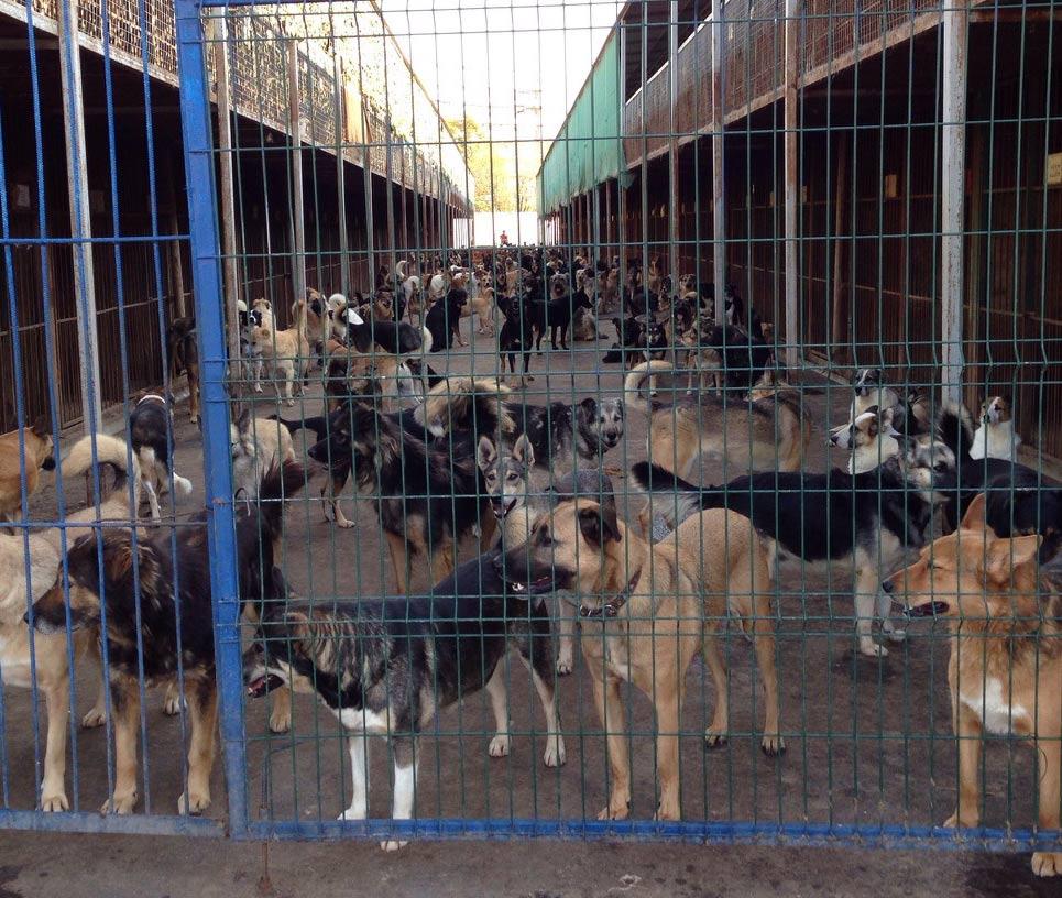 Tierschutz-Shop-Tierschutzhunde-Russland-Notstand