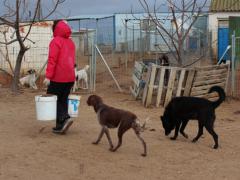 Tierschutzverein ASPA 1