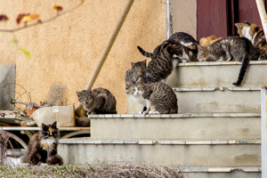 Tierschutz-Shop-Animal-Hoarding-Wenn-Tierliebe-zur-Sucht-wird