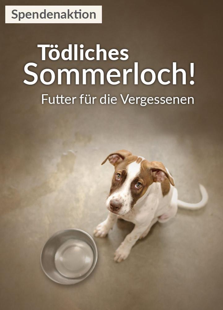 Tierschutz-Shop-Toedliches-Sommerloch-2018-Homepage-mobil
