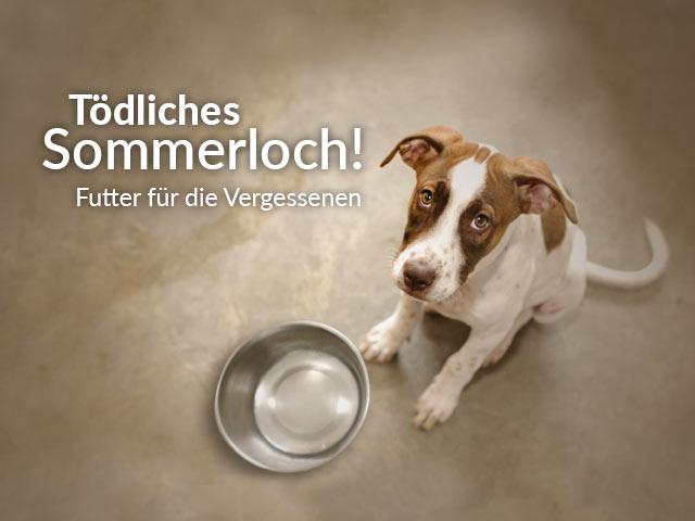 Tierschutz-Shop-Toedliches-Sommerloch-2018-Landingpage_640x480