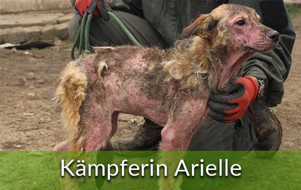 Geld Prämie Happy End Kämpferin Arielle