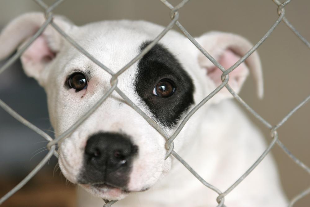Ratgeber-Adoptionshund