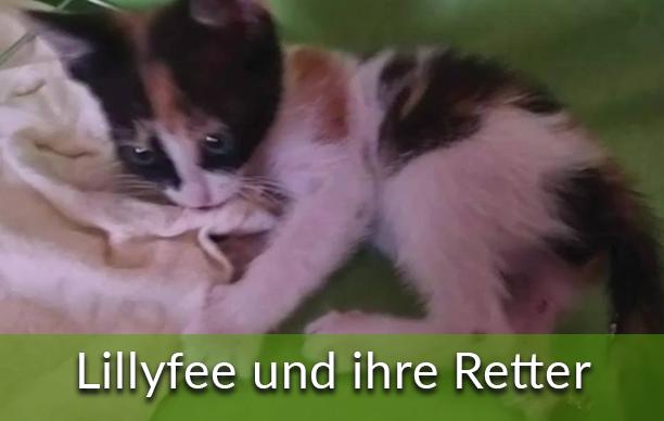 Lillyfee-und-ihre-Retter
