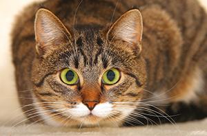 Katze aus dem Tierheim adoptieren