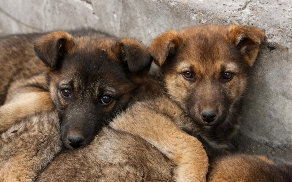 Tierschutz-Shop seriöser Tierschutzverein