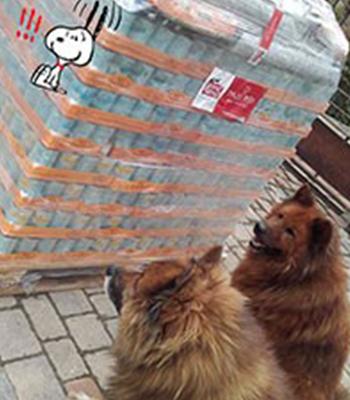 Schnelle-Hilfe-aus-der-Notfall-Wunschliste-für-den-Tierhof-Lucky-Farm