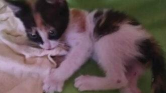 Tierschutz-Shop zahlt Geld-Prämie als finanzielle Hilfe an Tierschutzverein Frieden für Pfoten e.V.