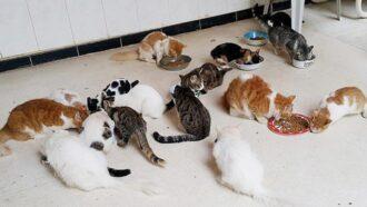 Tierschutz-Shop hilft dem Tierschutzverein Frieden für Pfoten e.V. mit der Geld-Prämie finanziell.