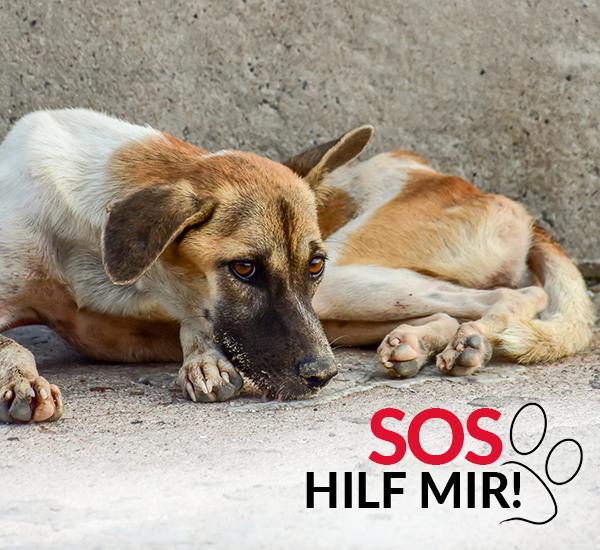 SOS-Hilf-mir-Größte-Streuner-Rettung-Tierschutz-Shop-Gemeinschaftswunschliste-mobil
