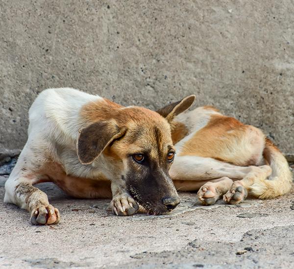 SOS-Hilf-mir-Größte-Streuner-Rettung-Tierschutz-Shop-Gemeinschaftswunschliste