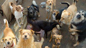 """Kaufe das Buch """"Die Schlucht der freien Hunde"""" und unterstütze automatisch den Tierschutz!"""