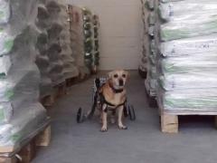 Spendenankunft Tierhilfe Phönix 1