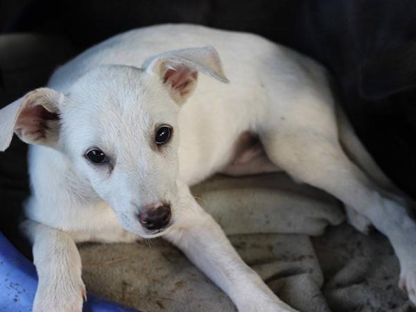 Tierschutz-Shop-SOS-Hilf-mir-Größte-Streuner-Rettung-Grenzenlose-Notfelle