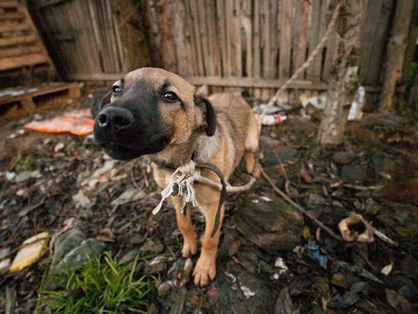 Tierschutz-Shop-SOS-Hilf-mir-Größte-Streuner-Rettung-Hundepfoten-Saarpfalz