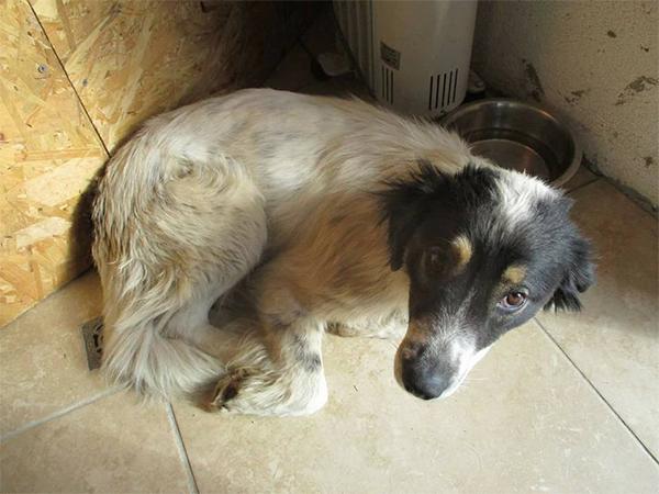 Tierschutz-Shop-SOS-Hilf-mir-Größte-Streuner-Rettung-Pfotenfreunde-Bulgarien