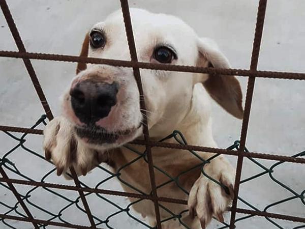 Tierschutz-Shop-SOS-Hilf-mir-Größte-Streuner-Rettung-Tierschutz-Werkstatt