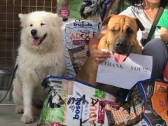 Spendenankunft Tierschutzhunde Russland 1