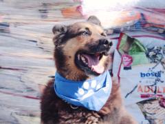 Spendenankunft Tierschutzhunde Russland 3
