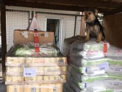 Spendenankunft Tierschutzverein Heppenheim 2