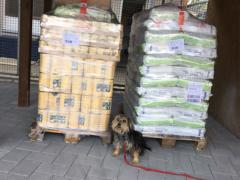 Spendenankunft Tierschutzverein Heppenheim 3