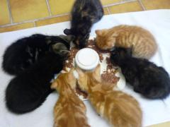 Spendenankunft Tierschutzverein OHZ 1