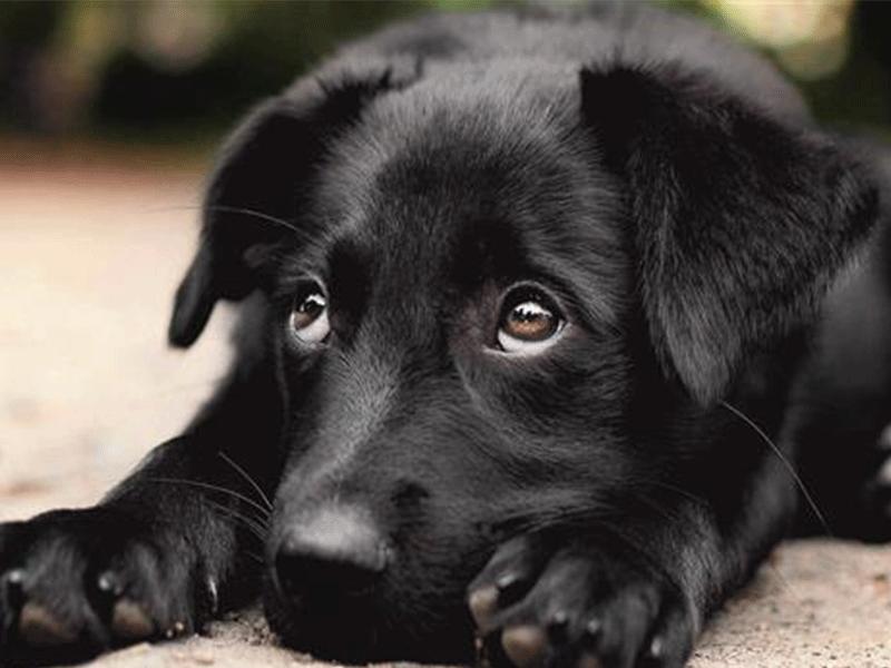 hund katzen hilfe spandau und umg hilf mit einer futterspende. Black Bedroom Furniture Sets. Home Design Ideas