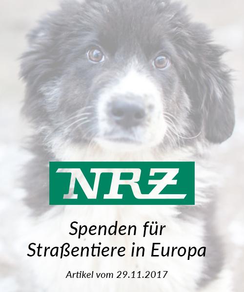 SM_Medienbeiträge_NRZ 2017