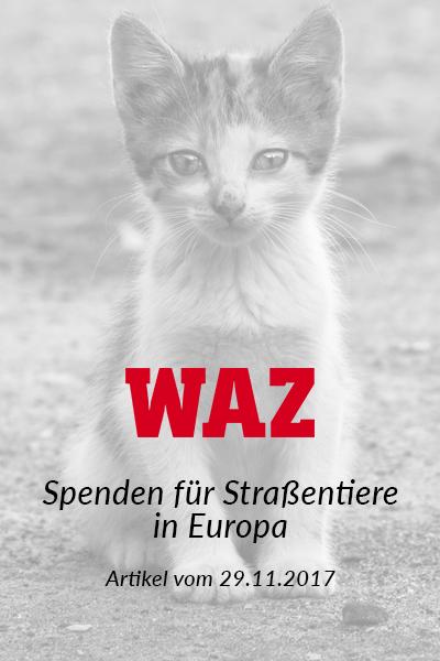 SM_Medienbeiträge_WAZ 2017_neu