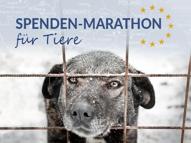 Tierschutz_Shop_Spendenplattform_Spendenmarathon_für_Tiere_2018_Landingpage_640x480_V2