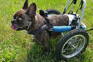 Bob-Tier-mit-Handicap-Tierschutz-Magazin