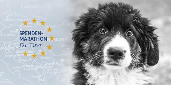 Erfolg-dank-Spenden-Marathon-für-Tiere-2017-Tierschutz-Magazin