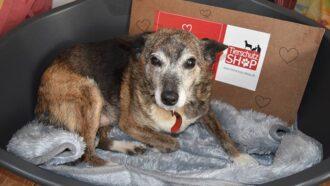 Der Tierschutzverein Arche Noah Transilvania erhält Geld-Prämie von Tierschutz-Shop.