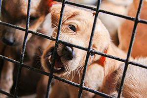 Illegaler-Welpenhandel-Tierschutz-Magazin-auf-dem-Tierschutz-Blog