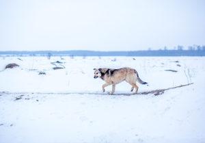 Marathon-Hund_Spenden-Marathon-2018-72dpi_3