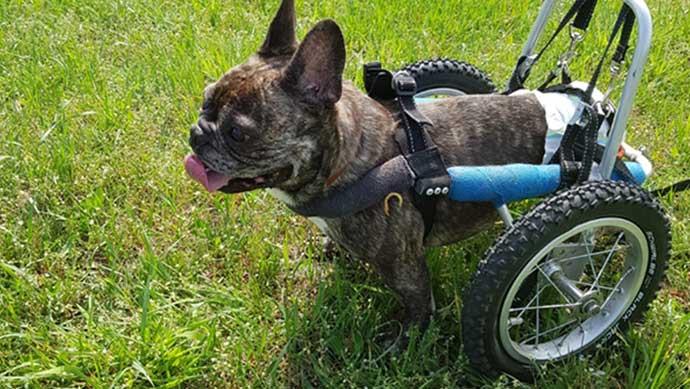 Warum auch ein Tier mit Handicap eine Chance verdient.