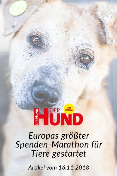 SM_Medienbeiträge_Der Hund 2018_neu