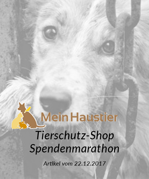 SM_Medienbeiträge_Mein-Haustier.de online 2017