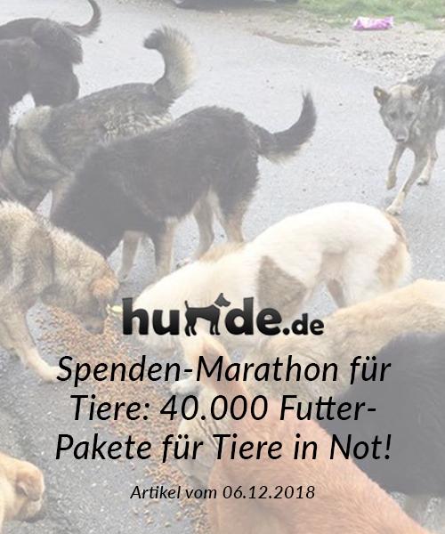 SM_Medienbeiträge_hunde.de 2018_final