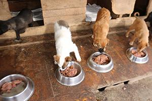 Spenden-Marathon-für-Tiere-im-Tierschutz-Magazin