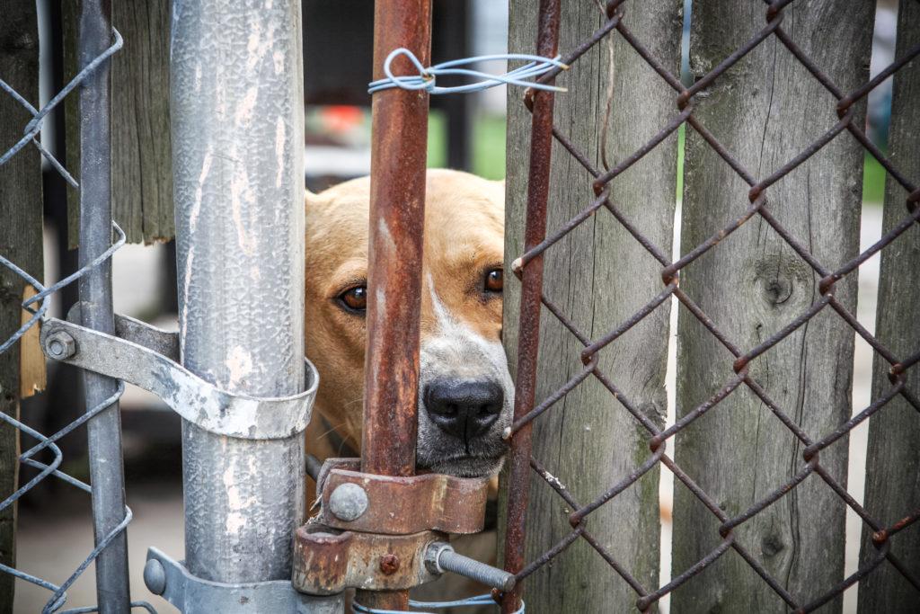 Tierschutz-Magazin 2018_Artikel Tierquälerei anzeigen_Hund Zaun