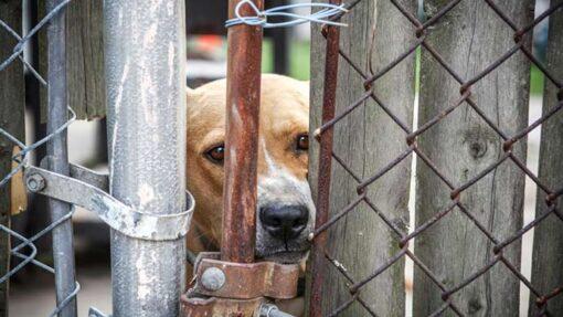 Tierquälerei anzeigen – wir zeigen dir, was du wissen musst.