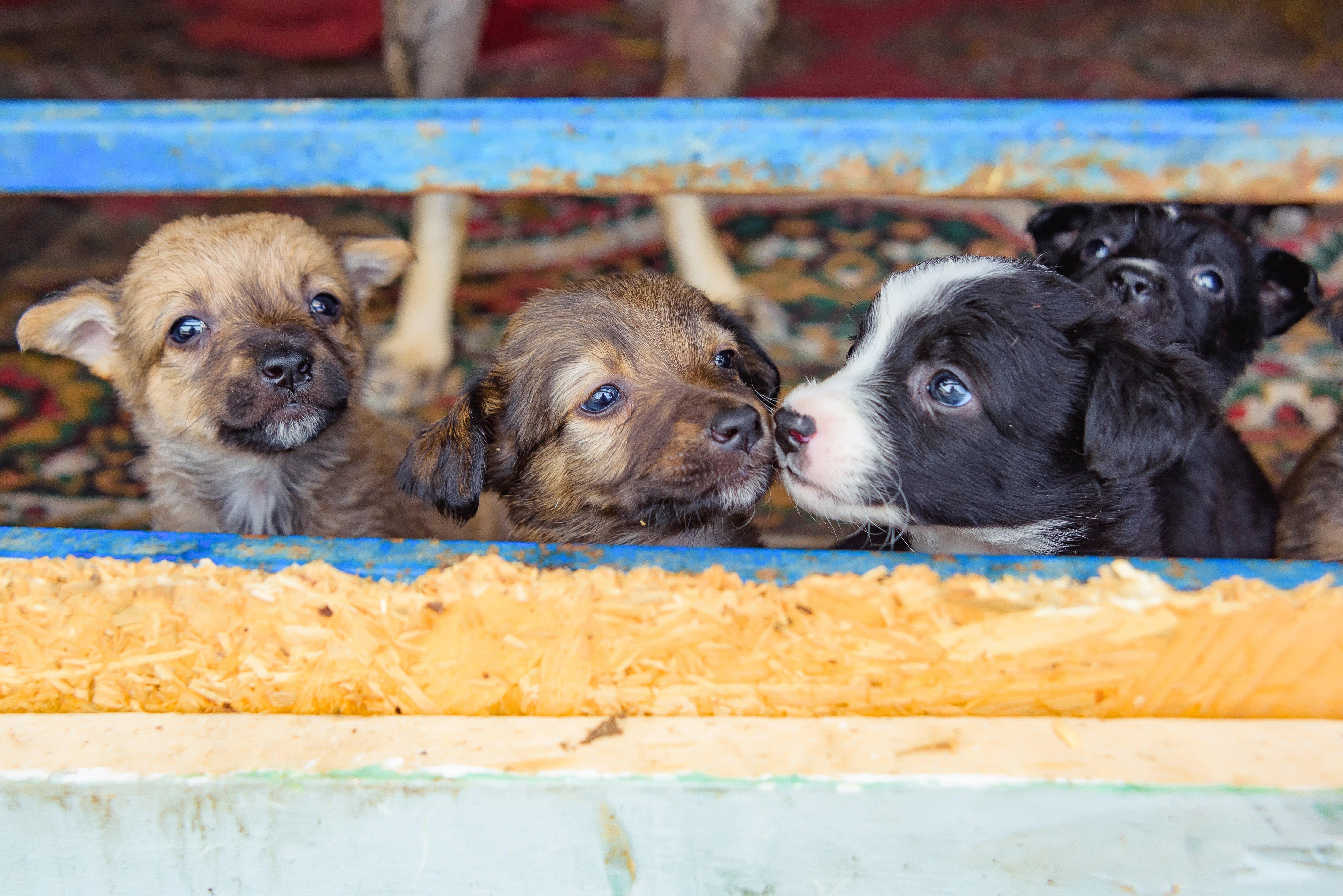 Illegaler Welpenhandel Tierschutz-Magazin Tierschutz-Shop