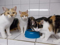 Spendenankunft Katzenhilfe Hoyerswerda 1