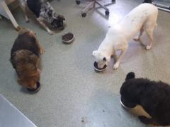Spendenankunft Nobody Dogs 1