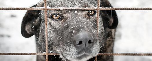 Spenden-Marathon-Hund-Gemeinschaftswunschliste