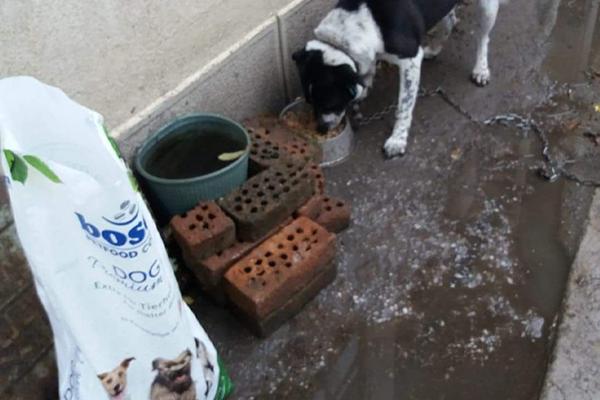 Spendenankunft-für Straßentiere in Not von-Pfotenfreunde-Bulgarien-1
