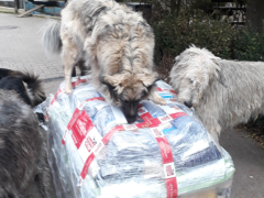 Spendenankunft Tierschutzhunde Russland 2